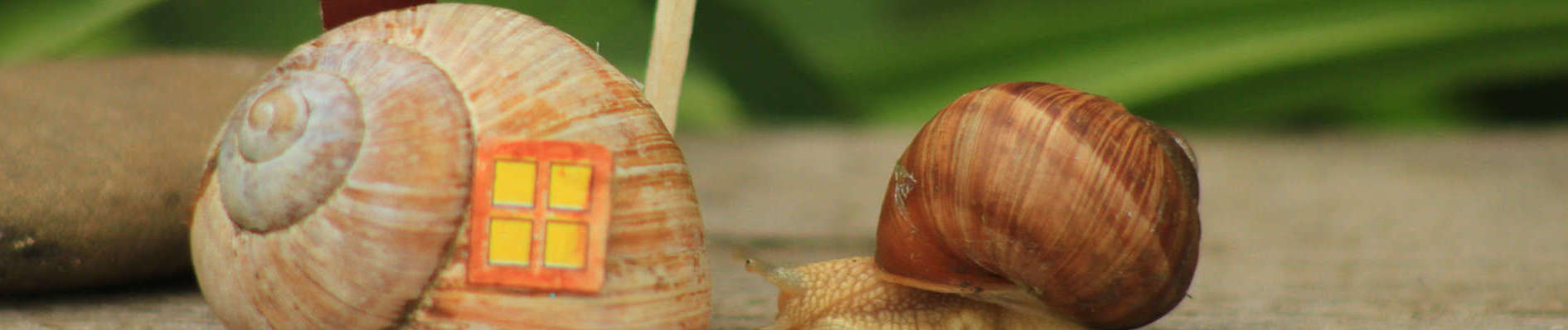 Photo of snails representing shells as homes