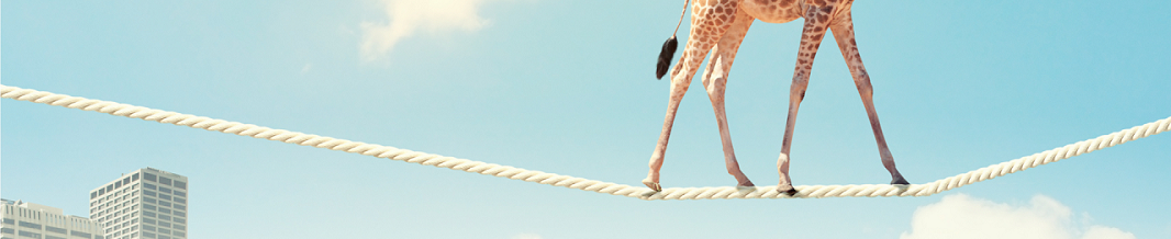 Photo of giraffe on tight rope