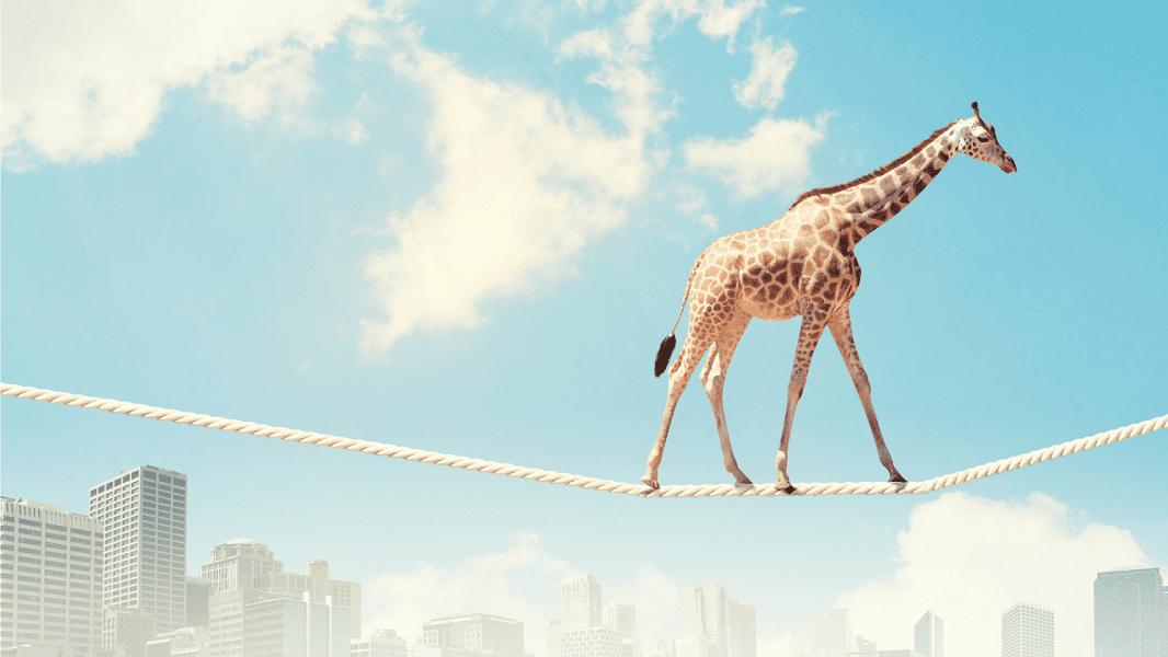 Photo of Giraffe on tight rope walk