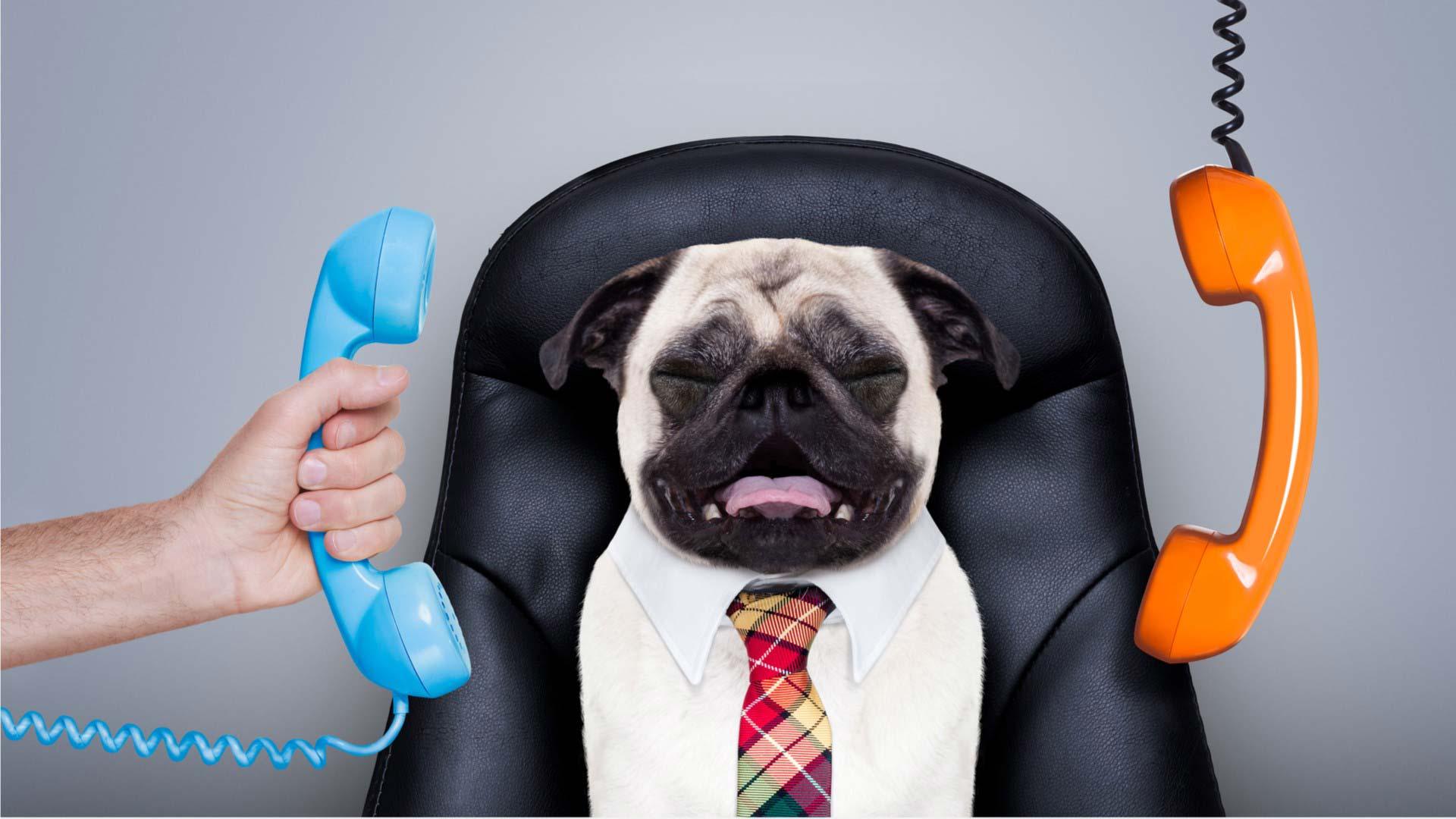 Business Pug